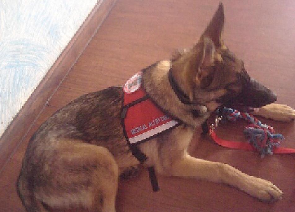 Service Dog Kane