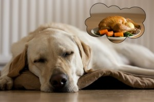 Thanksgiving Food Ideas for Service Dogs