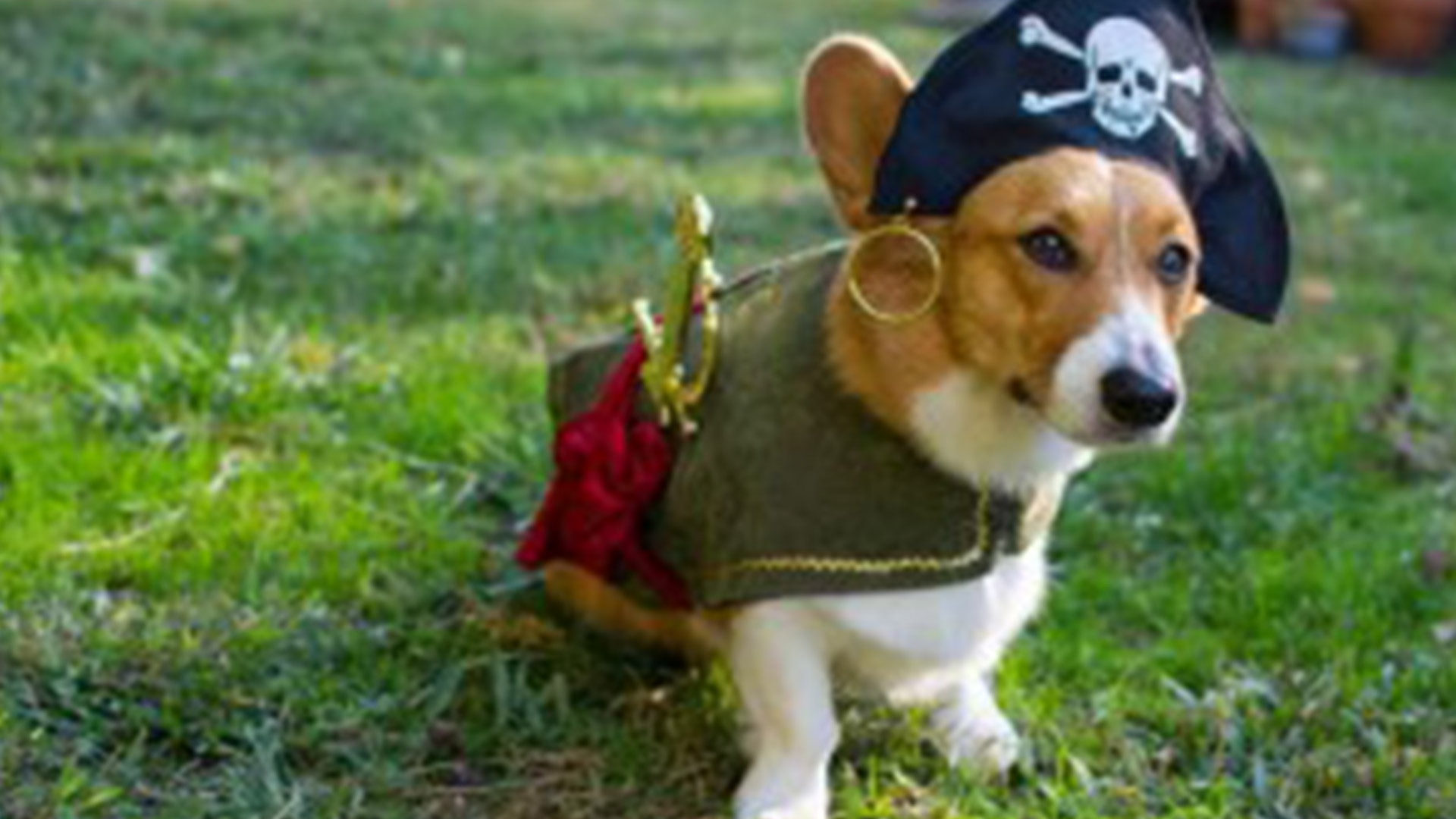 20 Pawsome Halloween Costume Ideas for Your Dog! & 20 Pawsome Halloween Costume Ideas for Your Dog! | AnythingPawsable