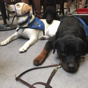 National Service Dog Month Dogs in Gear