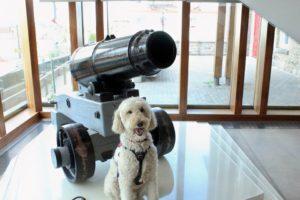 Service Dog at Niagara Falls History Museum