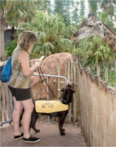 Tampa Zoo Service Dog Access